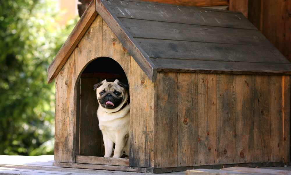 Suncast DH350 Dog House Review